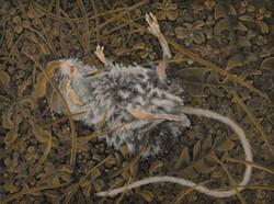 Dead Field Mouse