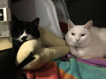 Travel cats