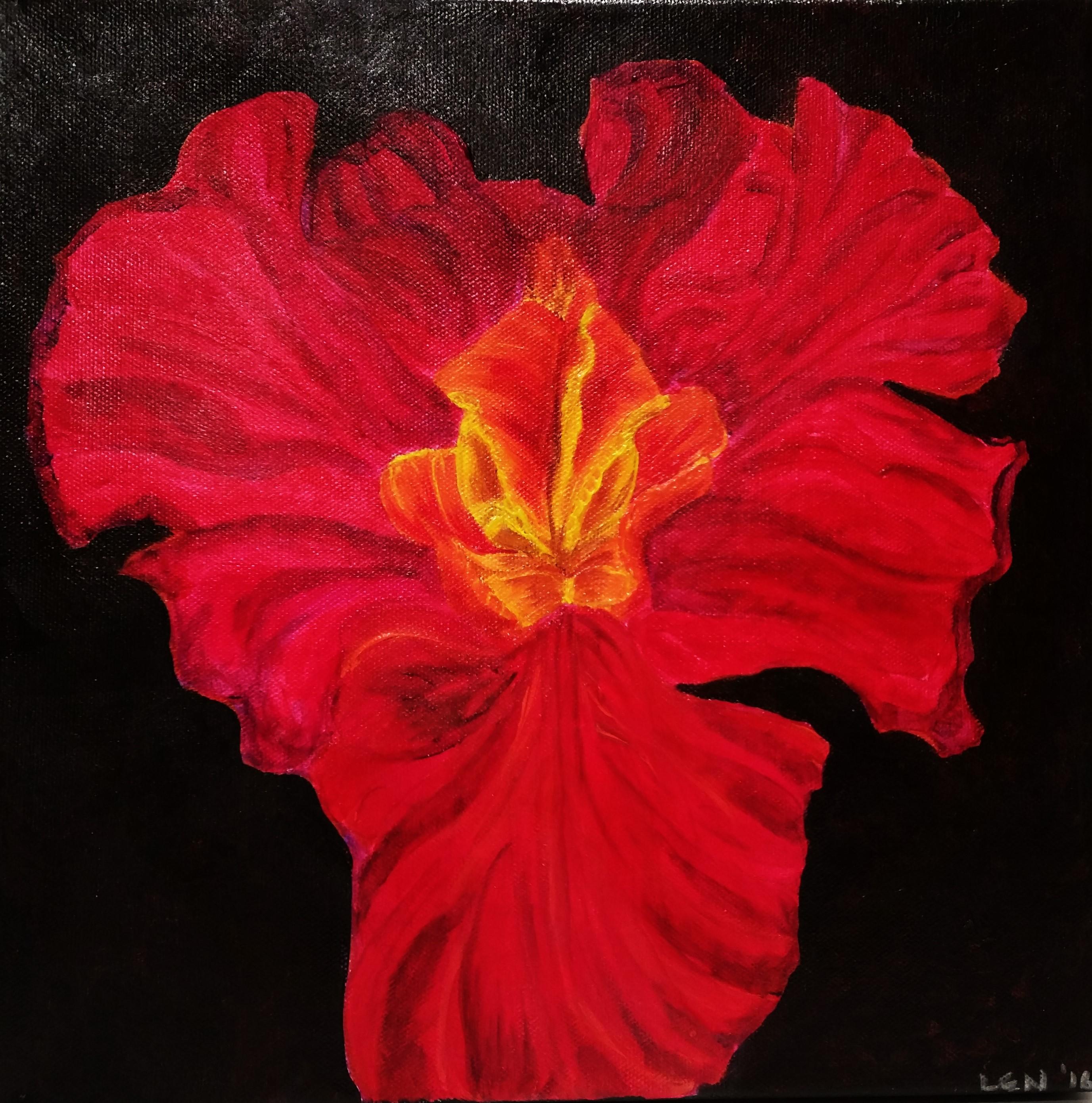 Fiery Iris