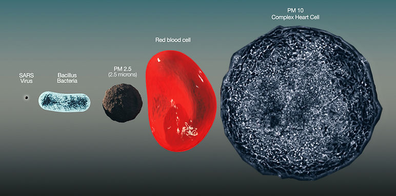PM2.5 with cells.jpg