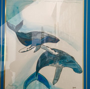 Humpback Whales - Hawaii
