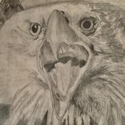 Eagle in Pencil