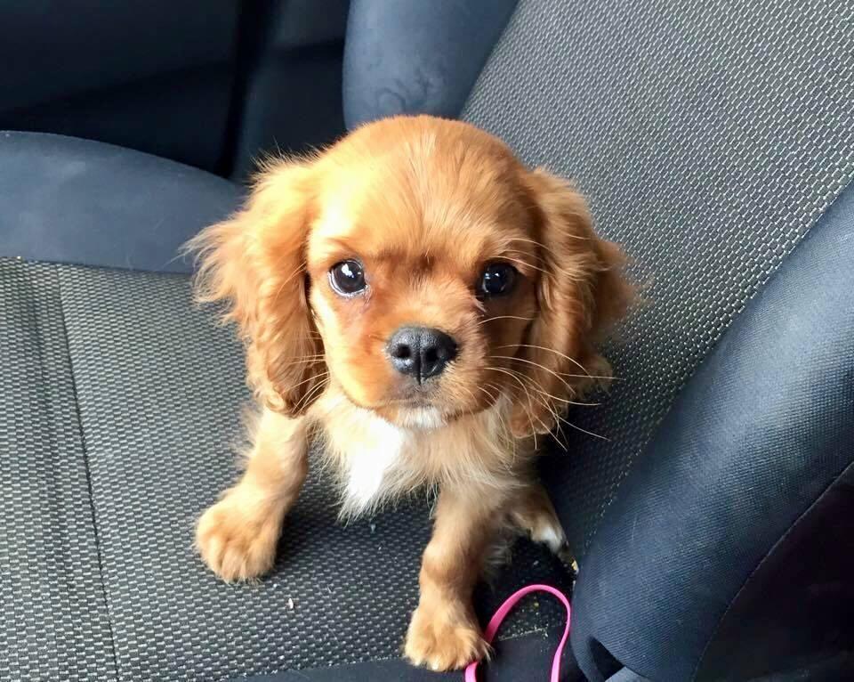 Baby Roux