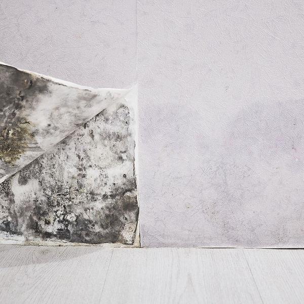 Mold-treatment-remediation-Hattiesburg-M