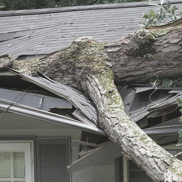 Fallen-tree-removal-Hattiesburg-MS.jpg