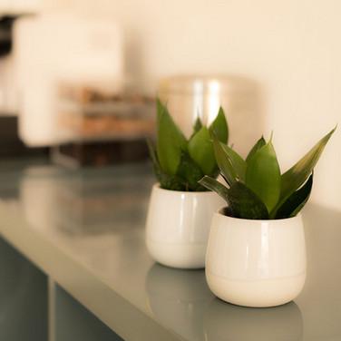 planter i venteværelse.jpg
