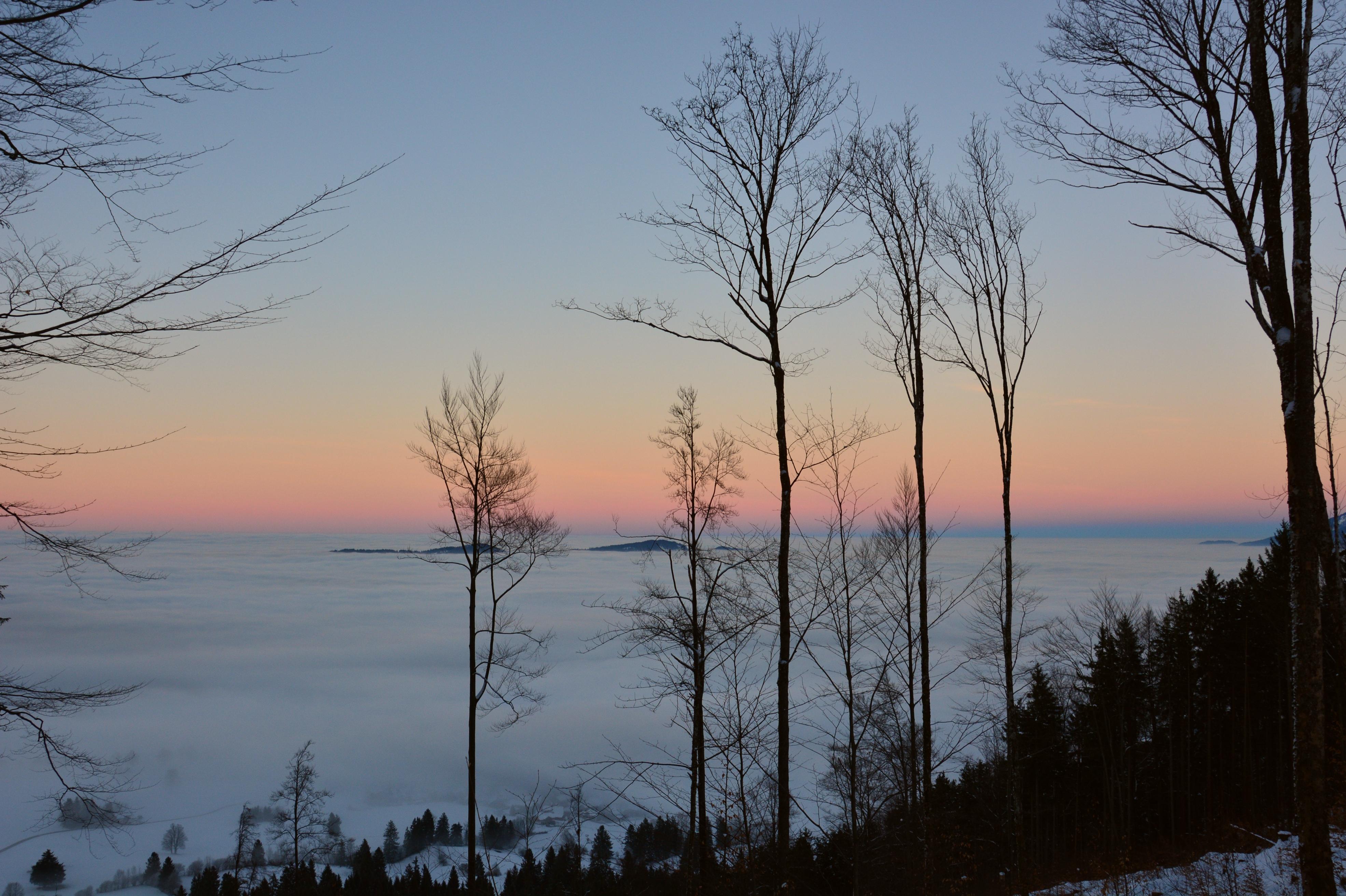 B0125_Falkenstein_Herbstwald_im_Sonnenuntergang_über_dem_Nebel.jpg