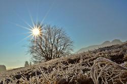 W0038 Wintersonne am Eglesee