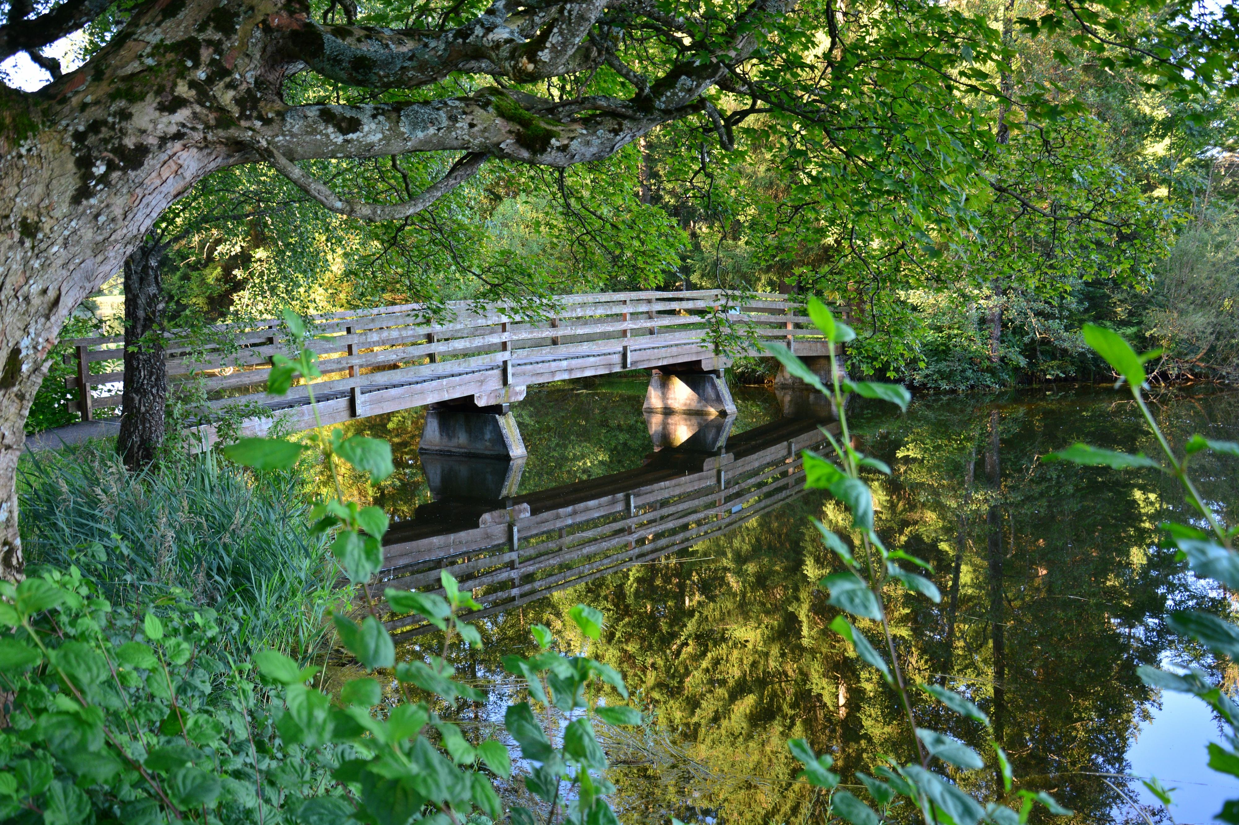 G0325_Brücke_am_Schwaltenweiher.jpg