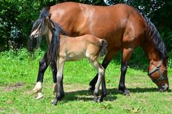 T0010 Pferdefohlen.jpg