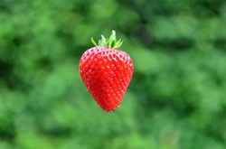 M0092 Erdbeere