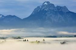 F0103_Nebelmorgen_im_Füssener_Land_mit_Säuling.jpg