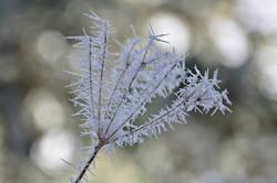 M0100 Eiskristallblume.jpg