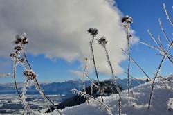 A0190 Frostblumen an der Ruine Falkenstein Pfronten.jpg