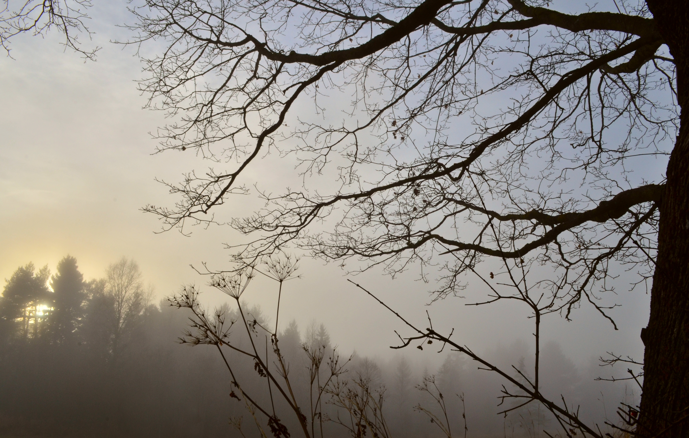 H0050 Nebel im Berger Moos Pfronten