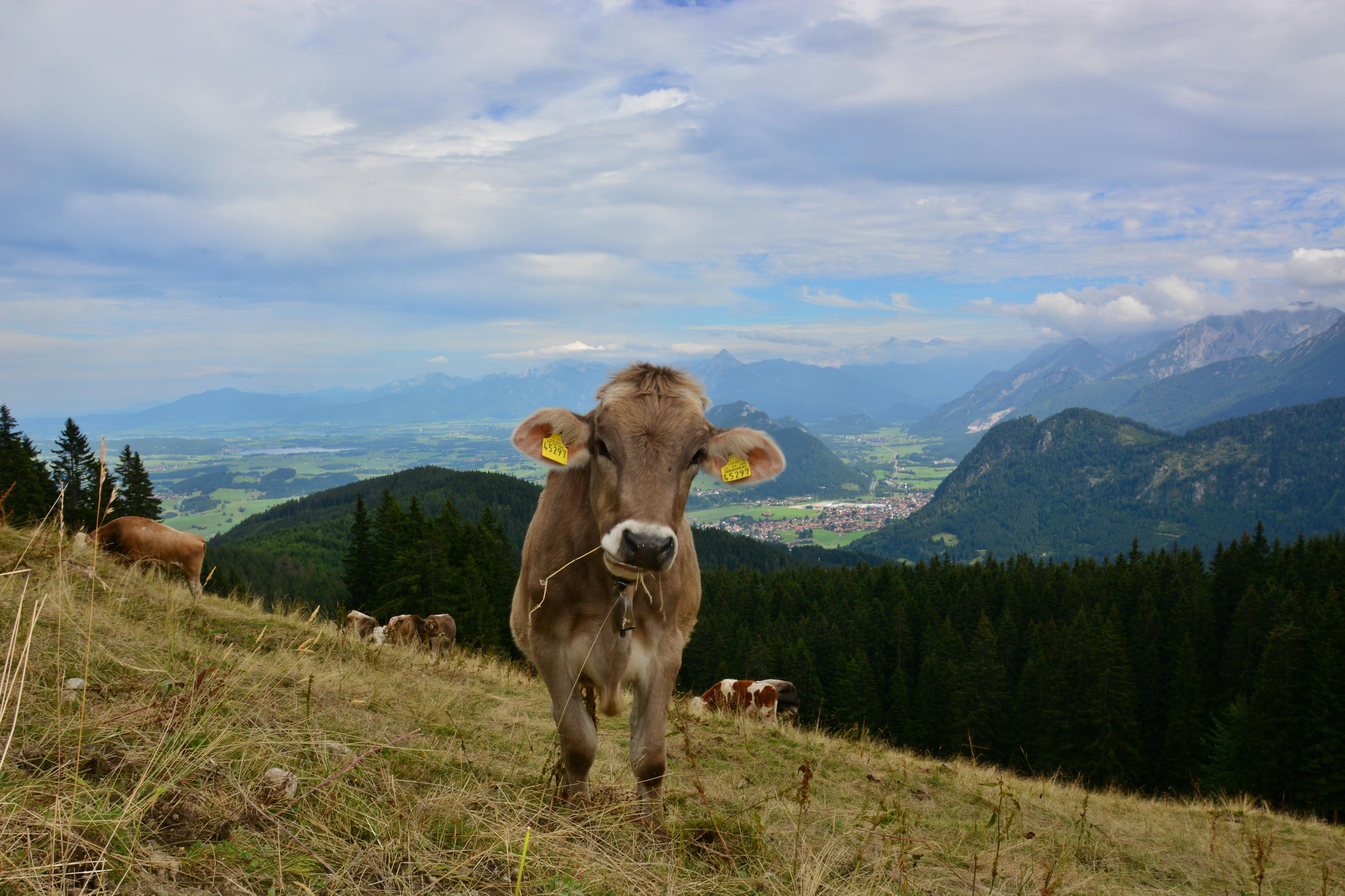 A0205 Schumpen Alpspitze.jpg