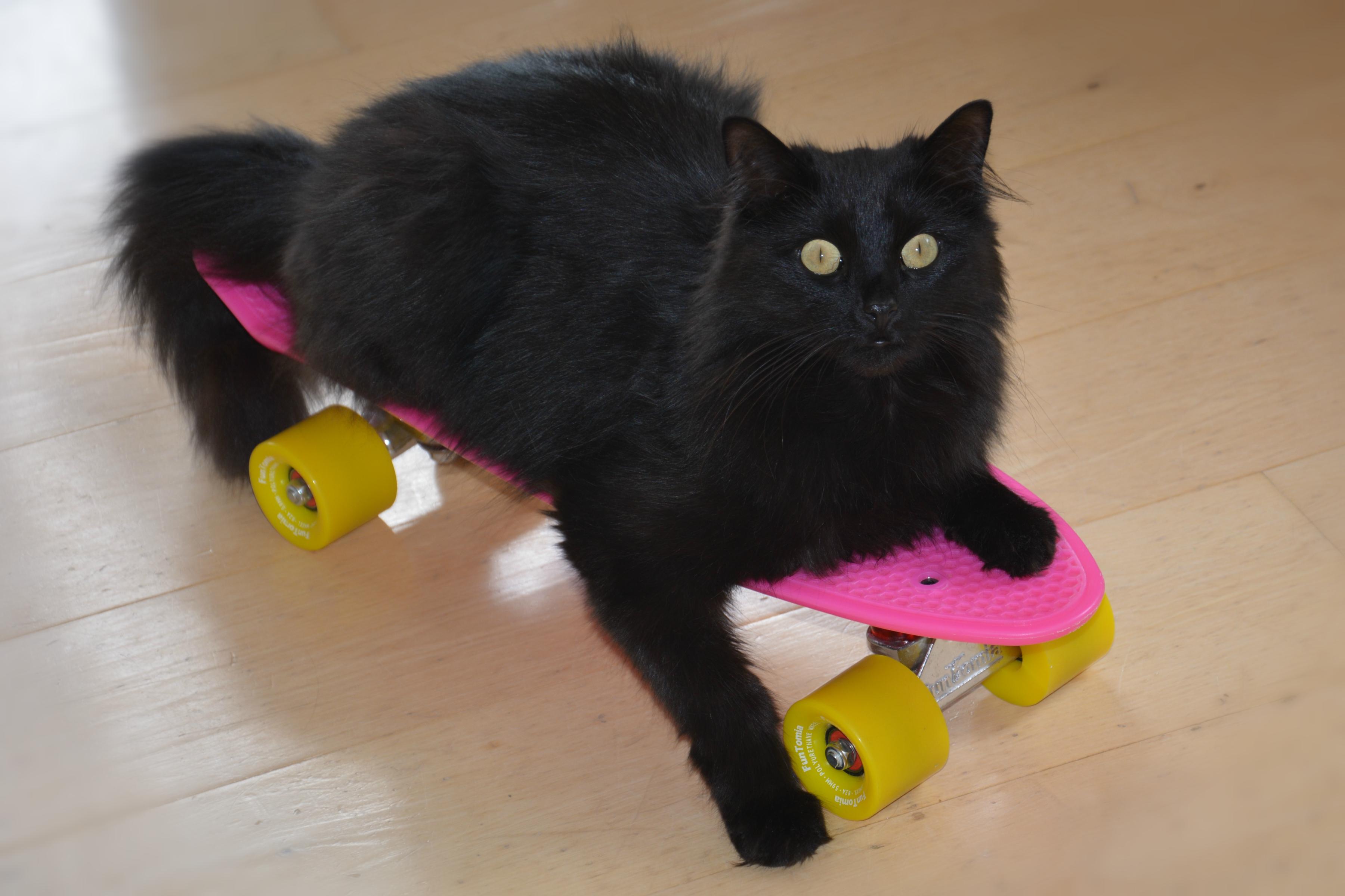 T0003 Boardkater.jpg