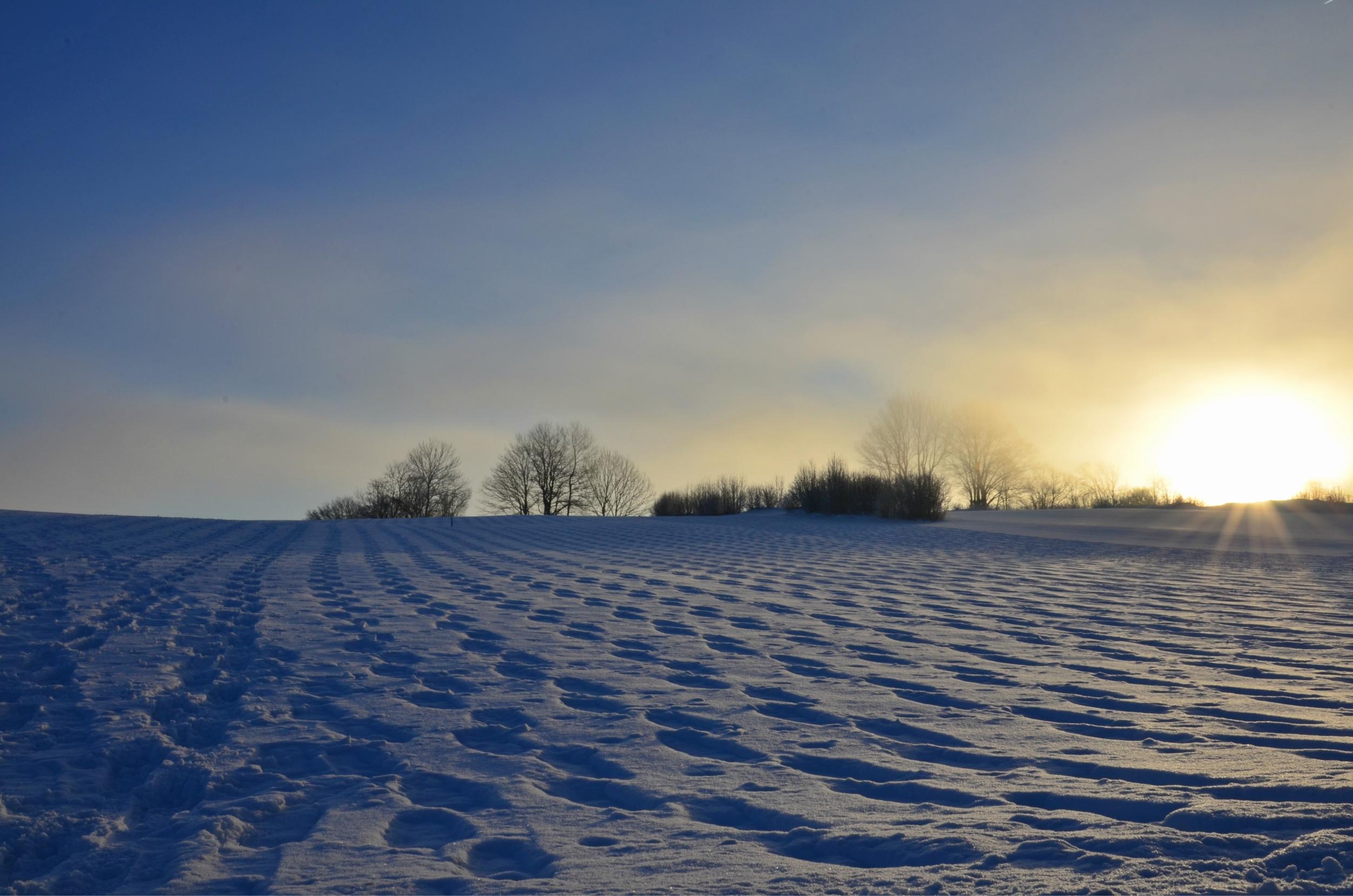 W0114 Spuren im Schnee Meilingen Nebelmorgen.jpg