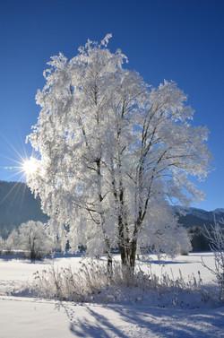 W0203 Winterbaum