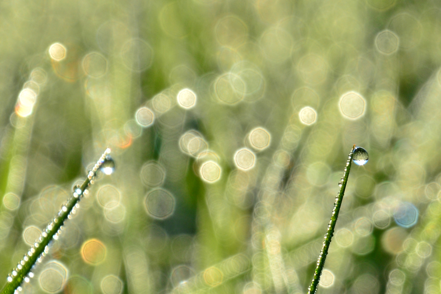 M0098 Tanz des Morgentaus.jpg