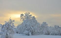 W0129 Winterzauber Rehbichl.jpg