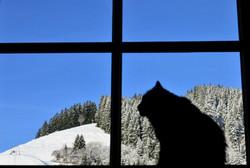 W0226 Wintertraumtag Fensterblick mit Kater.jpg