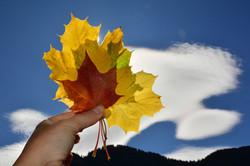 H0172 Herbstfarben.jpg