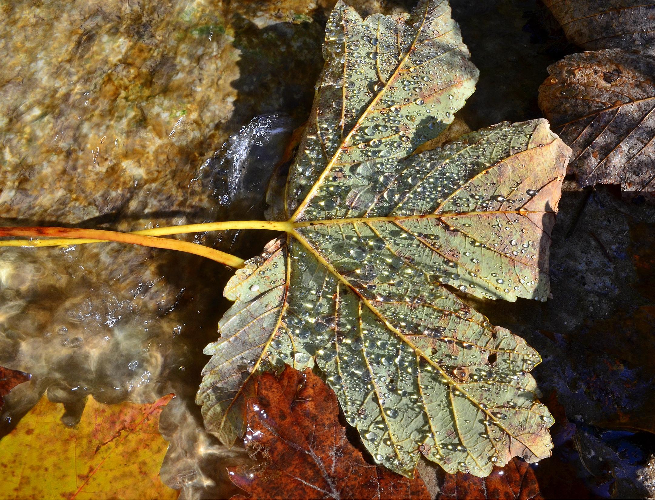 M0022 Herbstblatt mit Wasserperlen
