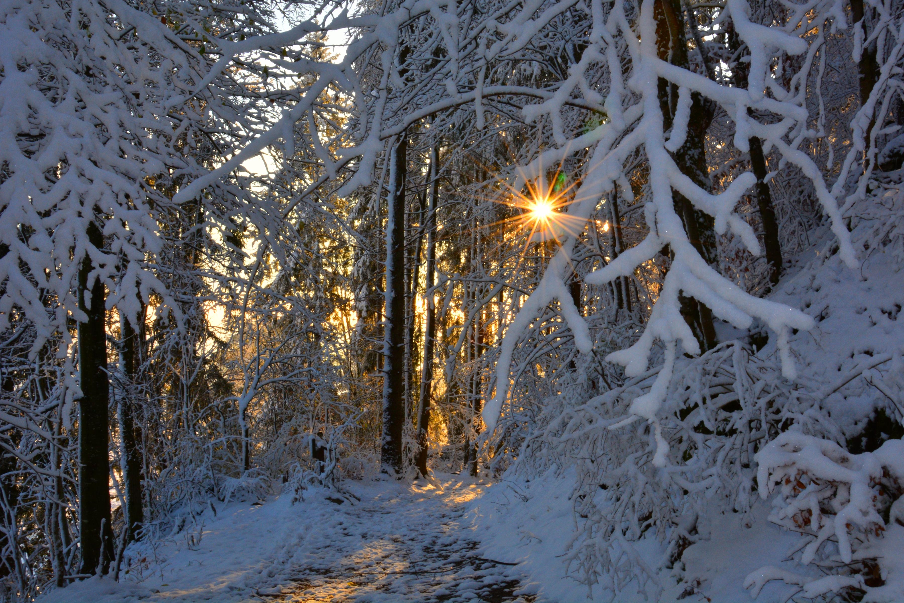 W0370 Winterwunderwald.jpg
