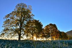 H0108 Herbstfrost.jpg