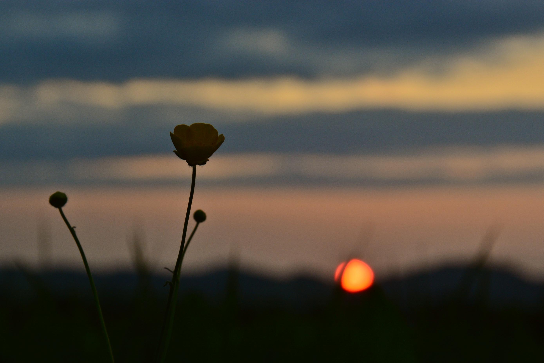 H0168 Blume im Sonnenuntergang.jpg