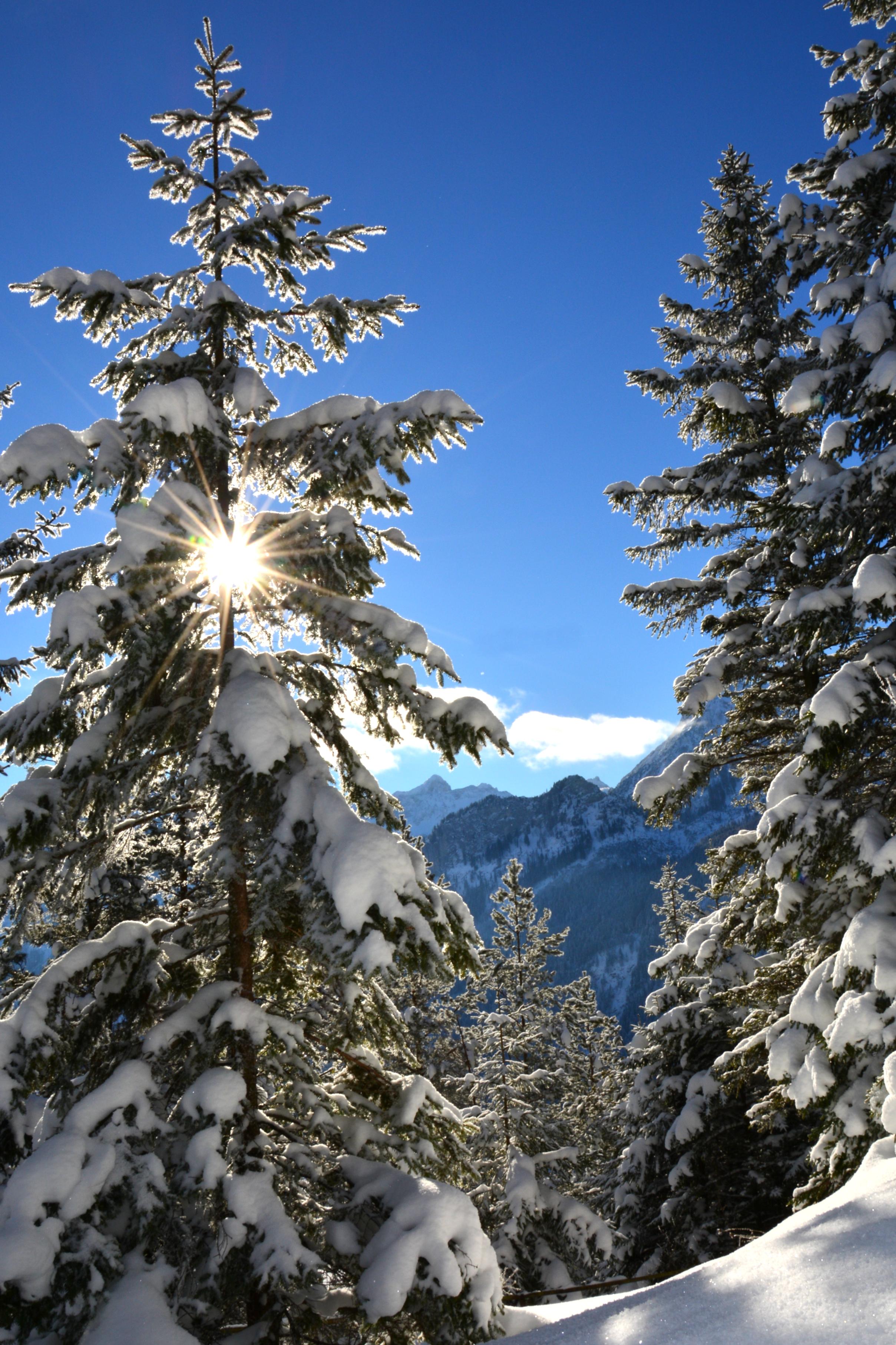 W0280 Winterwald.jpg