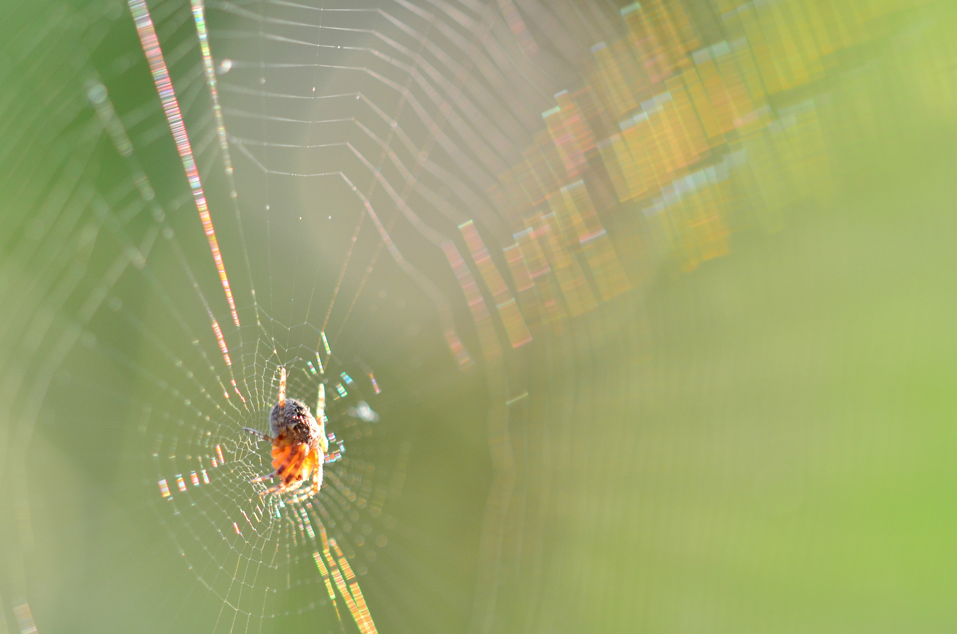 O0064 Spinnennetz