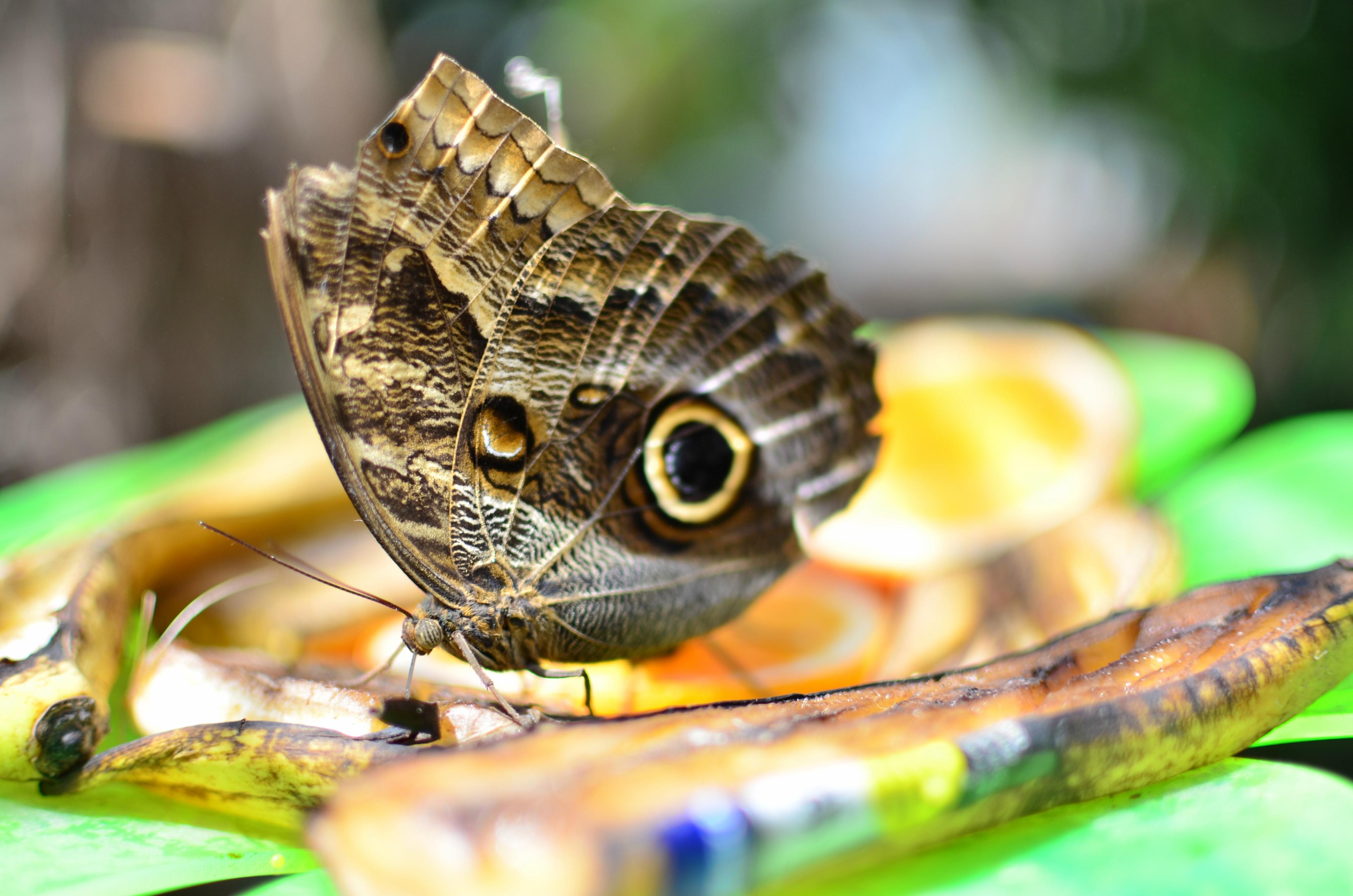 T0013 Schmetterling Schmetterlingswelt Pfronten.jpg