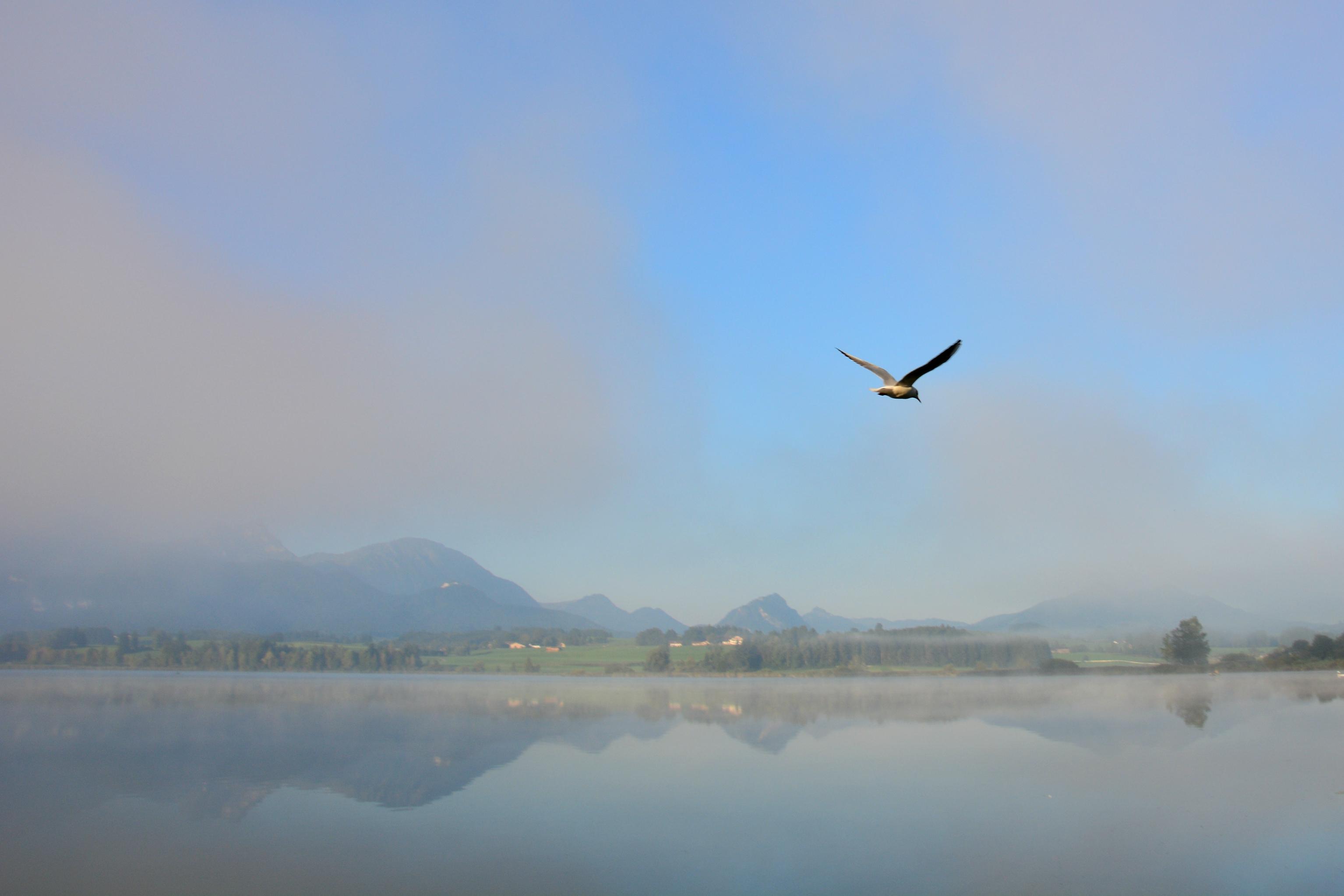 G0328 Aus dem Nebel am Hopfensee.jpg