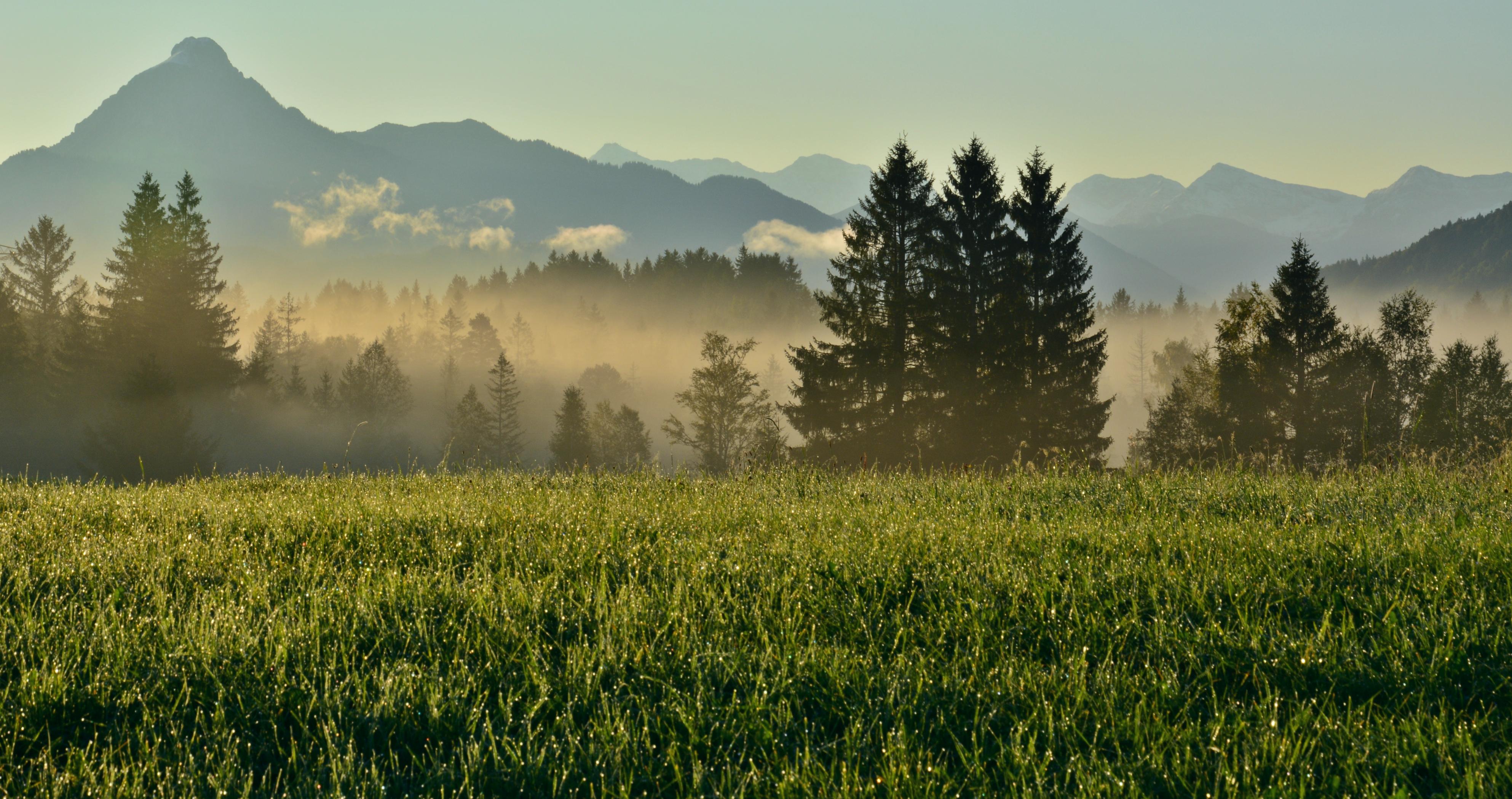 H0182 Nebelschwaden Wald Pfronten.jpg
