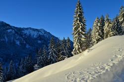 W0043 Willkommen 2015 im Schnee am Edelsberg