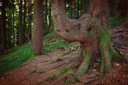 A0160_Der_Waldelefant_bei_der_Alpe_Bärenmoos.jpg