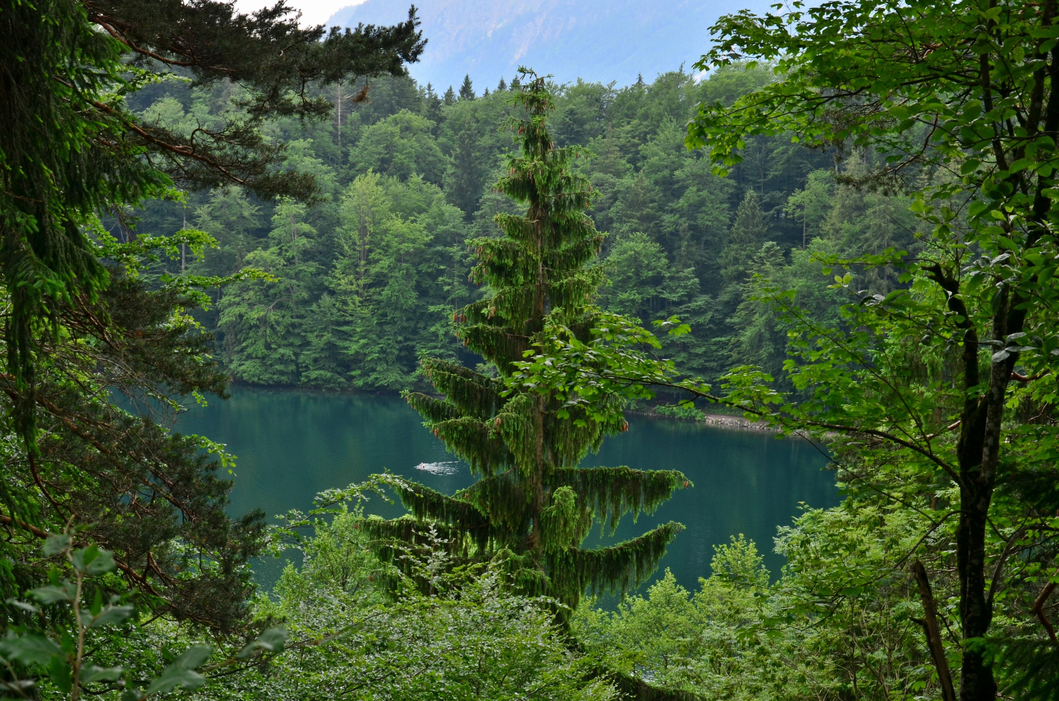 A0043_Saloberalm_Blick_auf_Alatsee_durch_Bäume.jpg