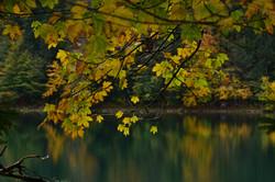 G0385 Herbstfarben am Alatsee.jpg