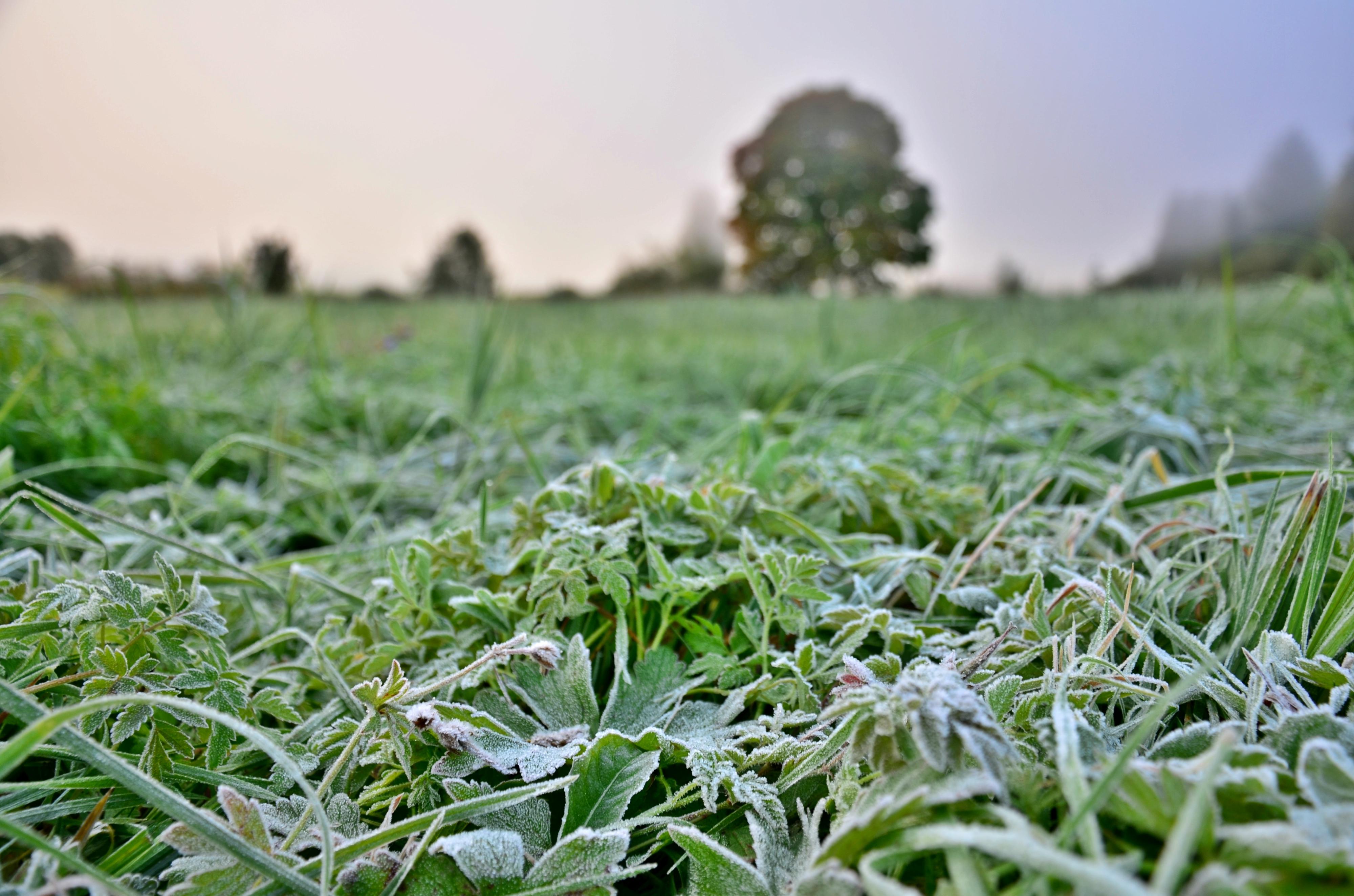 H0106 erster Frost.jpg