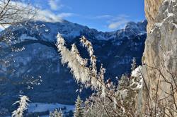 W0239 Frostblumen an der Mariengrotte Blick Aggenstein.jpg