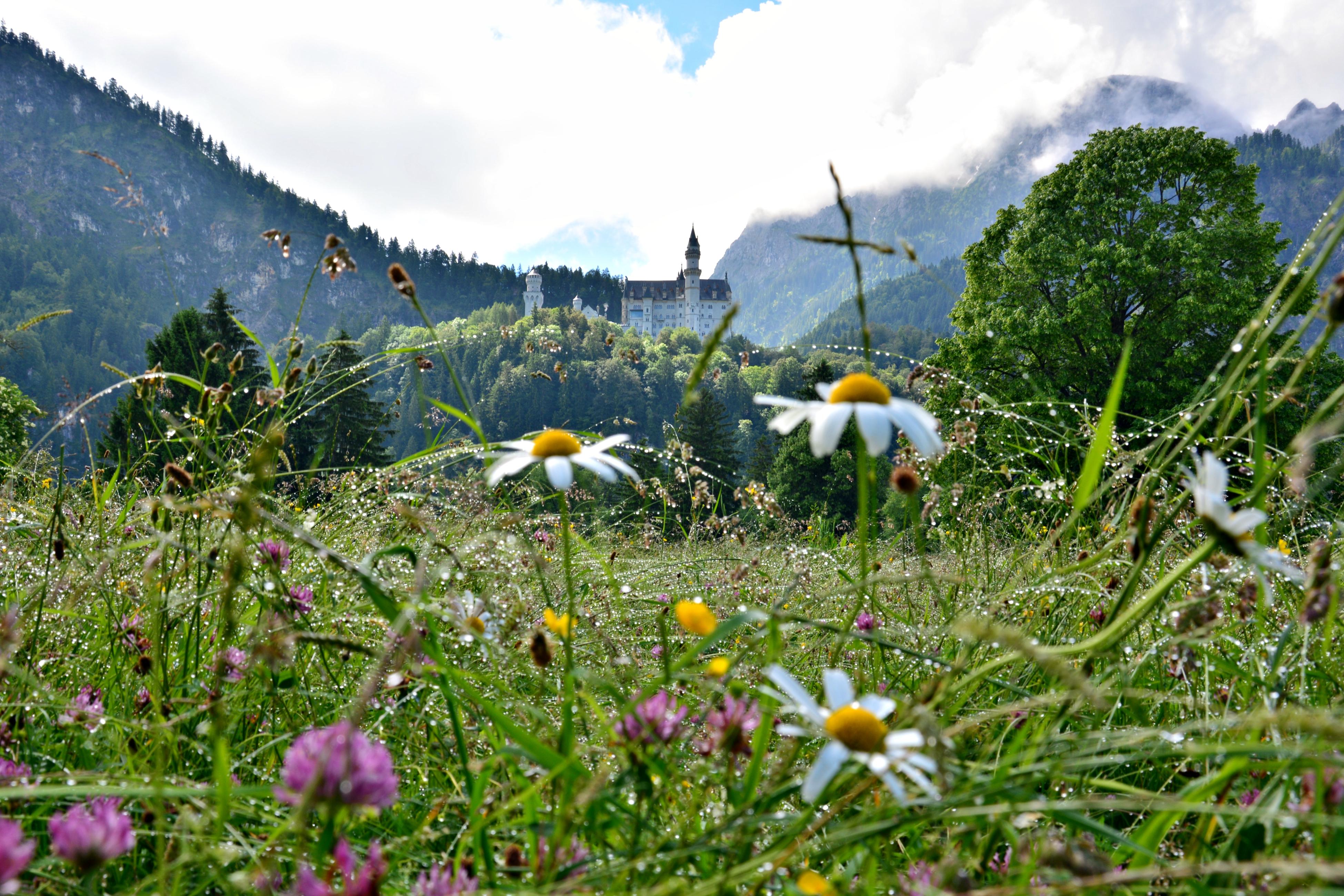 S0056 Blumenwiese und Schloss Neuschwanstein.jpg