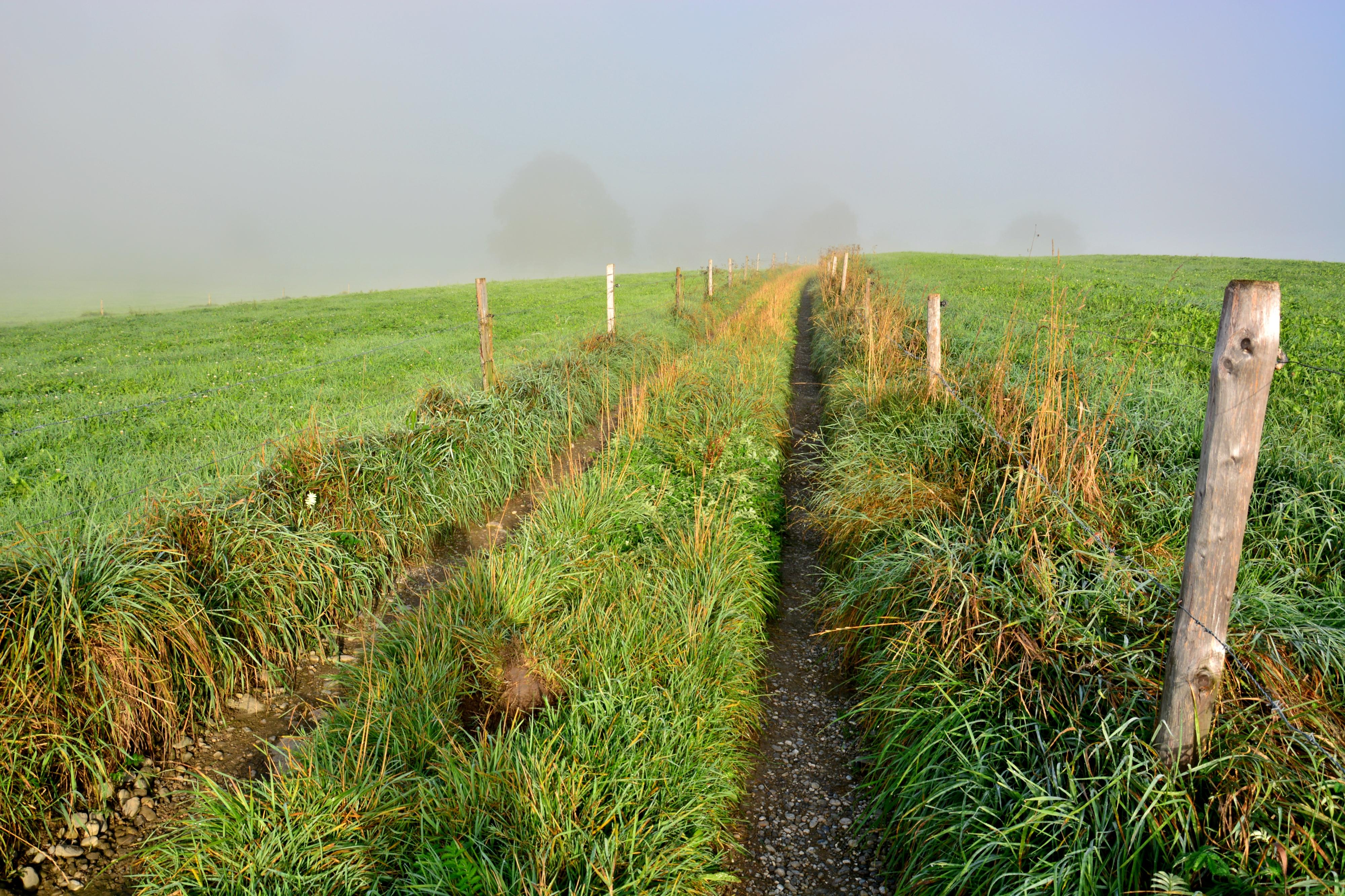 H0163 Spaziergang in den Nebel.jpg