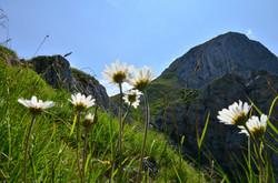 A0049_Durch_die_Blume_zum_Gipfel_Säuling.jpg