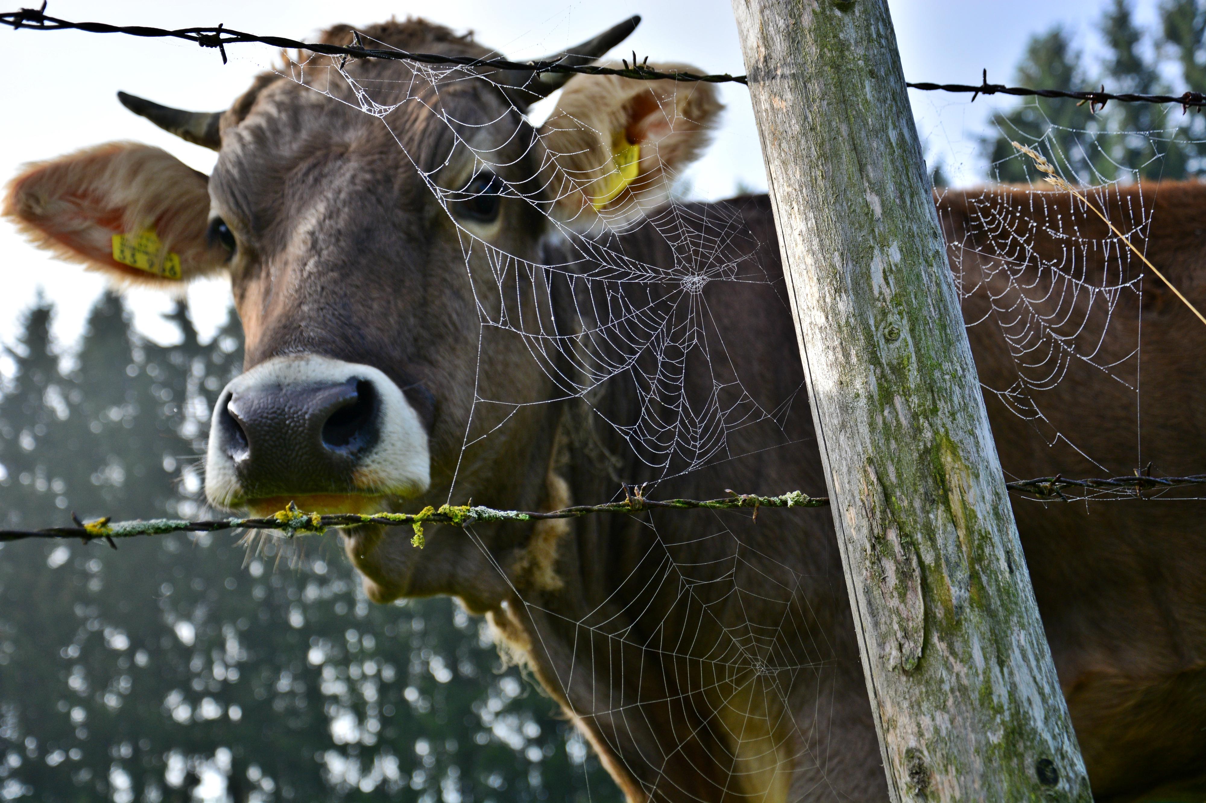 T0024 Herbstzeit auf der Viehweide.jpg