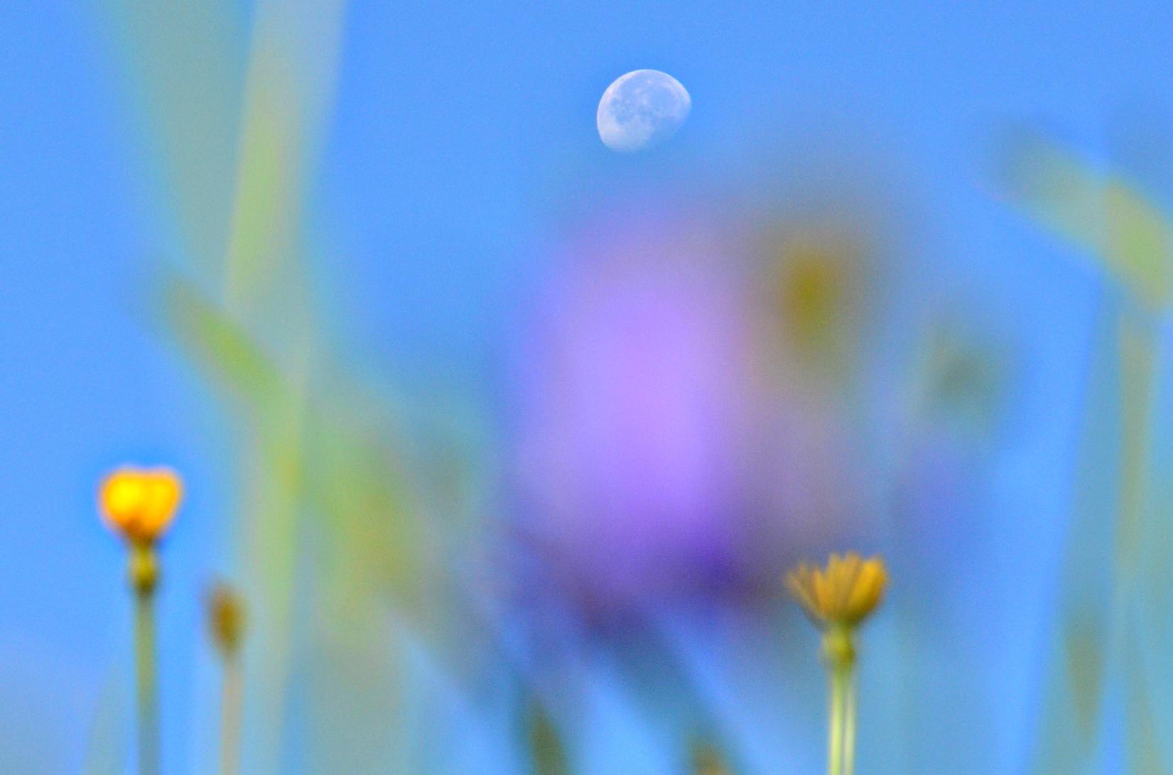 S0080_Mond_über_der_Sommerwiese.jpg