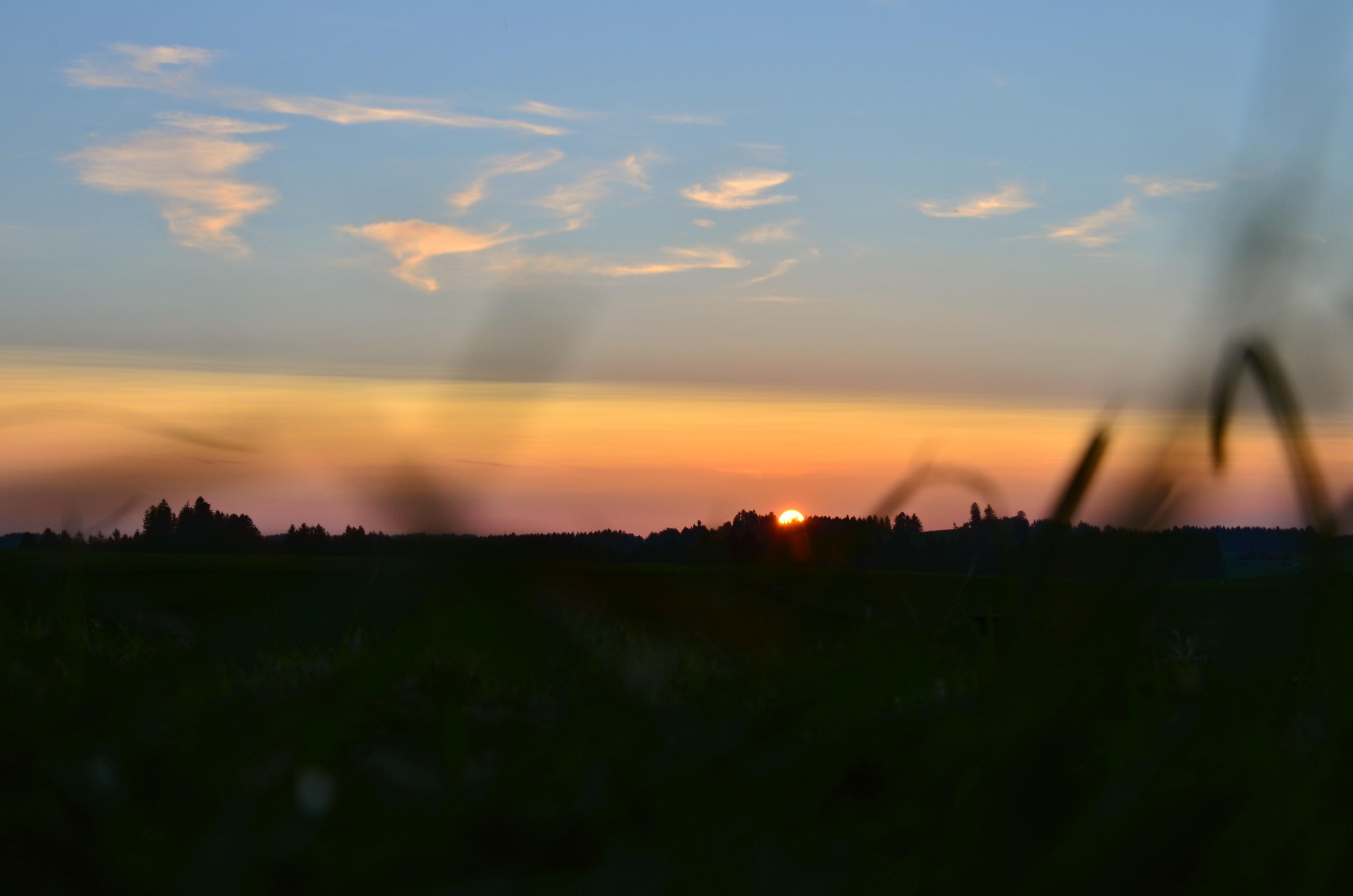 S0104 Sonnenuntergang in der Wiese.jpg