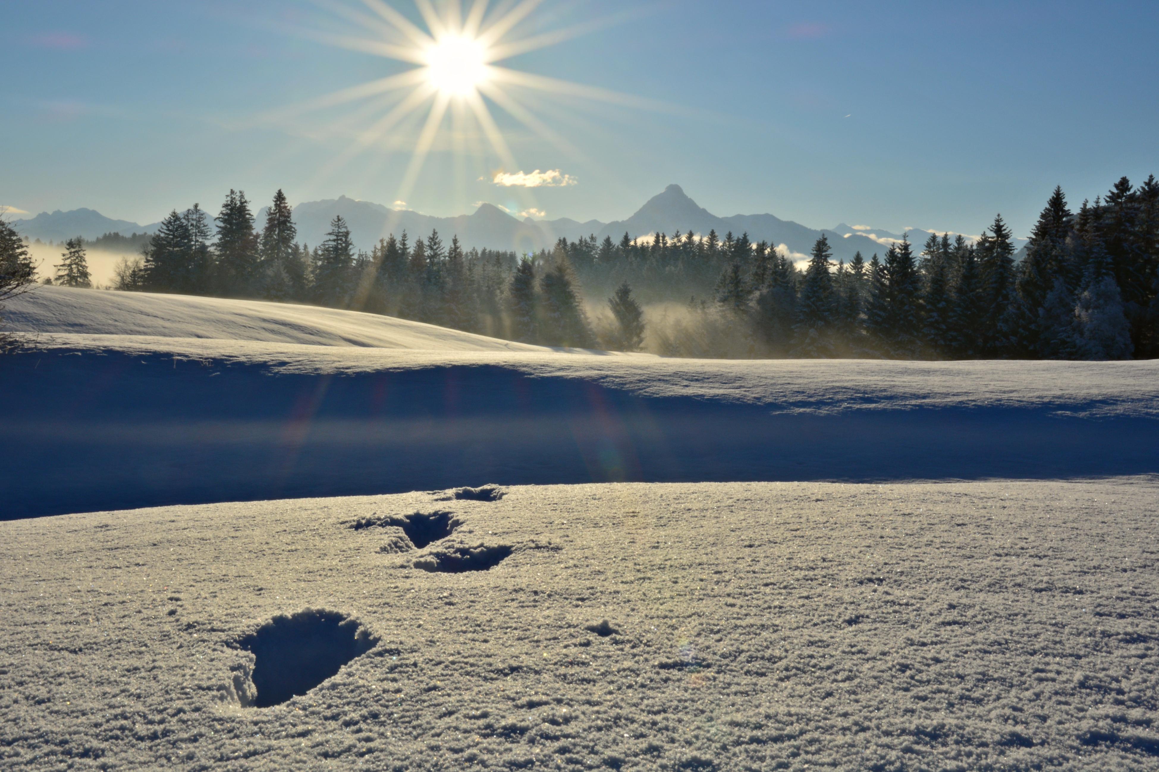 W0349 Spuren im Schnee Pfronten.jpg