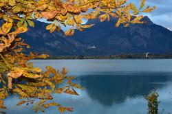 G0386 Herbstlaub  am Forggensee.jpg